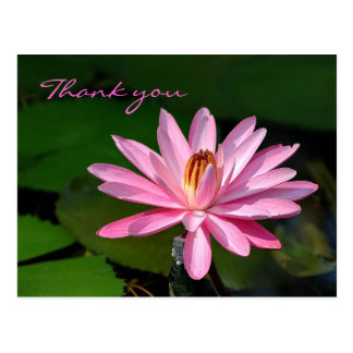 pink water lily Thank you Post Card