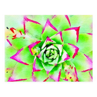 Pink Watercolor Succulent Postcard