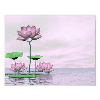 Pink waterlilies and lotus flowers - 3D render Photo Print