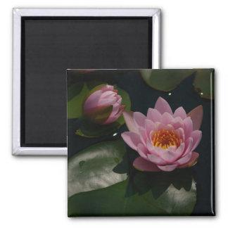 Pink Waterlilies Magnet