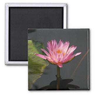 Pink Waterlily Lotus magnet