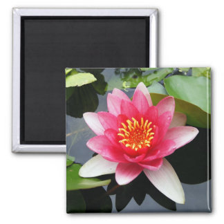 Pink Waterlily Magnet