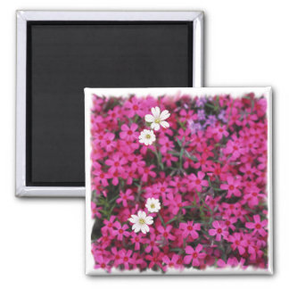 Pink & White Flowers Magnet