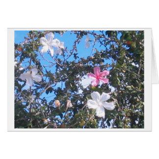 pink/white hibiscus card