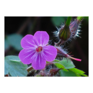 Pink Wild Flower Posters