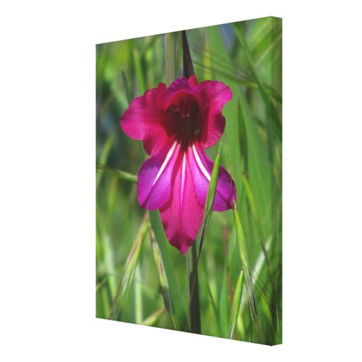 Pink WildFlower Gallery Wrapped Canvas
