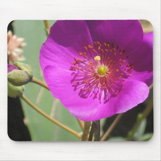 Pink wildflower mouse pads