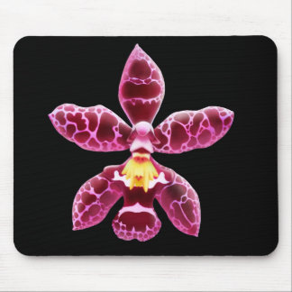 Pink Wilsonara Orchid Flower Mouse Pad
