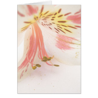 Pink yellow and white lily greeting card
