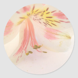 Pink yellow and white lily round sticker