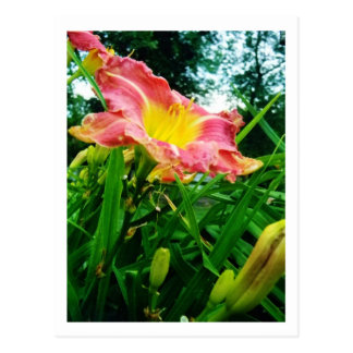 Pink & Yellow Flower Postcard