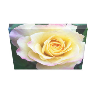 Pink & Yellow Rose Canvas