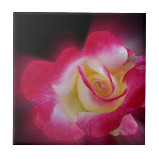 pink yellow rose small square tile