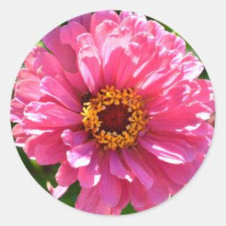 Pink Zinnia Classic Round Sticker