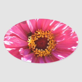 Pink Zinnia Oval Sticker