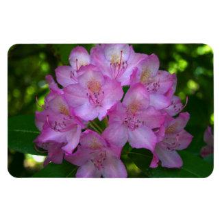 Pinkish purple Rhododendron Catawbiense Rectangular Photo Magnet