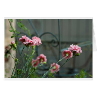 Pinks growing in a Cotswold Garden Card