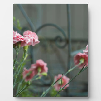 Pinks growing in a Cotswold Garden Plaque