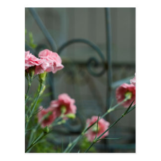Pinks growing in a Cotswold Garden Postcard