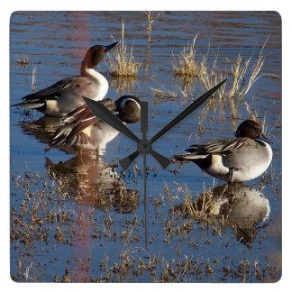 Pintail Duck Birds Wildlife Animals Wall Clock