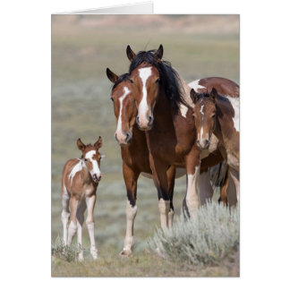 Pinto Family Wild Horse Greeting Card
