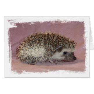 Pinto Hedgehog Card