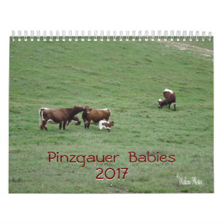 Pinzgauer Babies 2017 Calendar-customise year Calendars