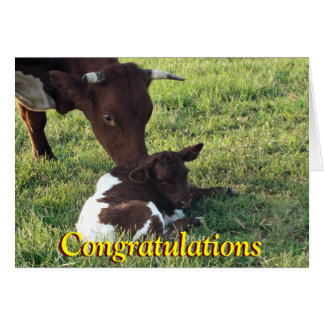Pinzgauer cow&calf-customize any occasion card