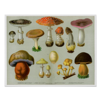 Piosonous Fungi - Mushrooms and Toadstools Poster