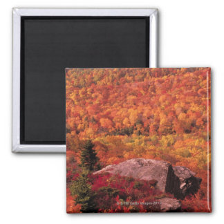 Pisgah National Forest from Blue Ridge Parkway , Square Magnet