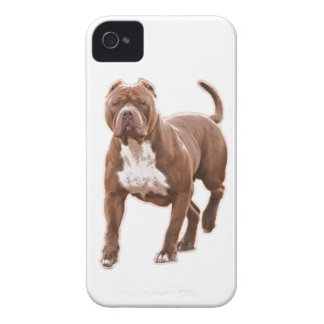 Pit bull brown iPhone 4 case