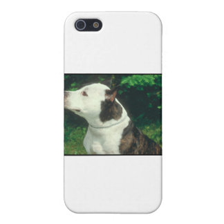 Pit Bull iPhone 5/5S Case