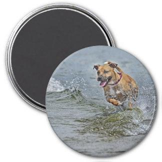 Pit Bull Rescue Vegas Magnet