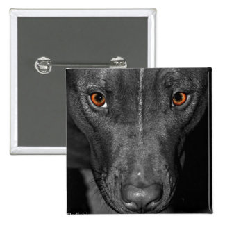 Pit Bull s Eyes Black and white color Pinback Button