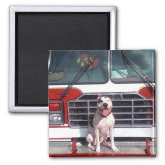 Pit Bull T-Bone Fire House Dog Magnet