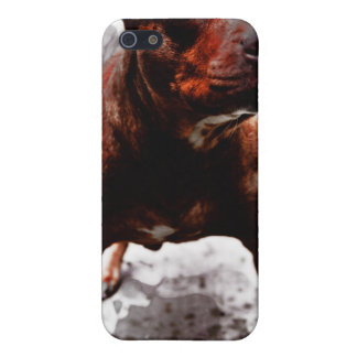 Pit bully Kali iPhone 5/5S Cover