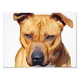 Pitbull dog art photo