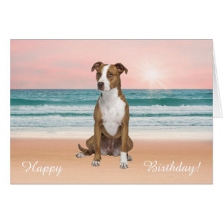 Pitbull Dog Sitting on Beach sunset Birthday Card