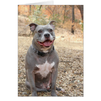 Pitbull Ear-to-Ear Smile Thank You Note Card
