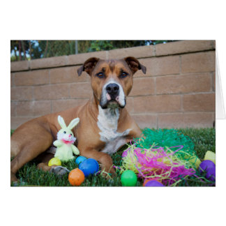 Pitbull Easter Card
