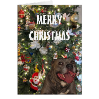 Pitbull Merry Christmas Greeting Card
