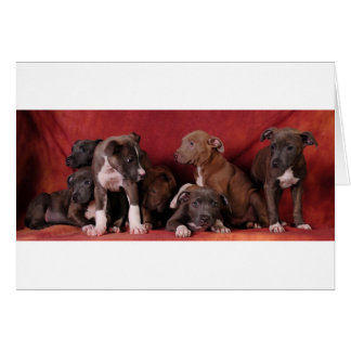 Pitbull puppy heaven card
