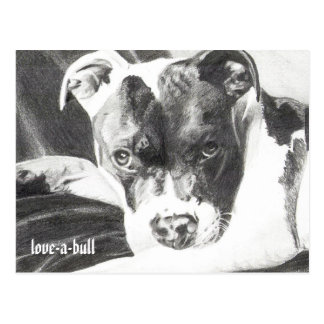 Pitbull Puppy in pencil 4 by Jacob Grimm Postcard