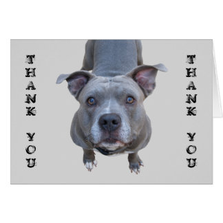 Pitbull Thank You Card