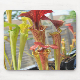 Pitcher Plant Mouse Pad 2