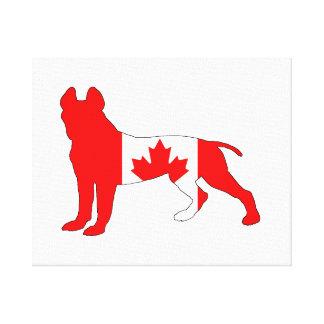 Pitt Bull Terrier Canvas Print