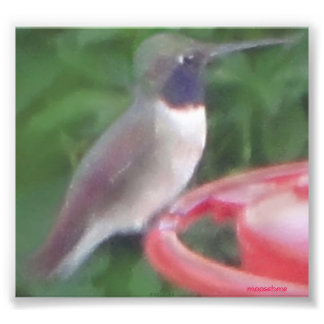 Pix-elated Humming Bird Pic Photo Print