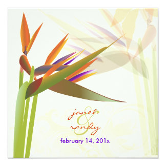 PixDezines BIRD OF PARADISE/DIY Background Color Card