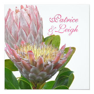 PixDezines fresh maui protea pale pink/diy 13 Cm X 13 Cm Square Invitation Card
