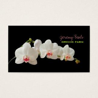 PixDezines orchid/diy background color♥♥♥